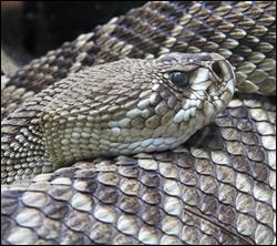 snake removal Sachse